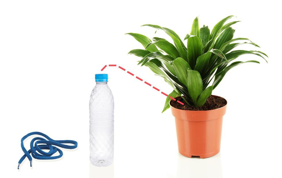 ¿Te vas de vacaciones? Cuida tus plantas con estos tips  - 1