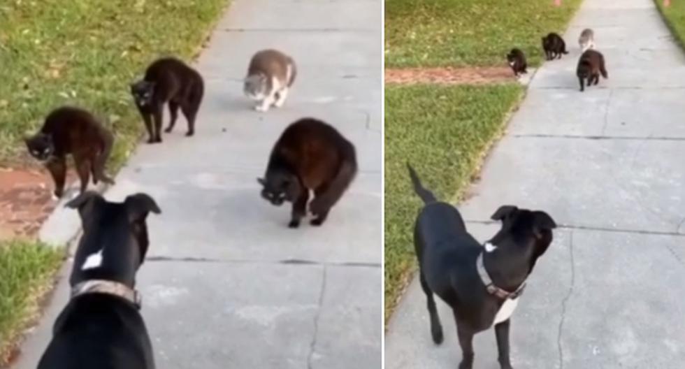 El perro desde el inicio demostró sentir mucho miedo por los gatos callejeros. (YouTube: ViralHog)