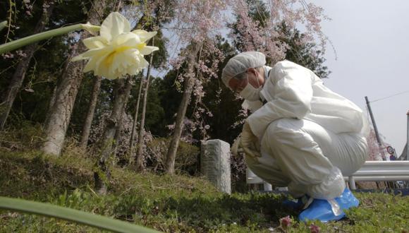 Fukushima: Radiación en los bosques se redujo a la mitad
