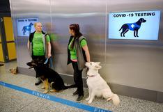 Aeropuerto de Helsinki usa perros para detectar el coronavirus en proyecto piloto