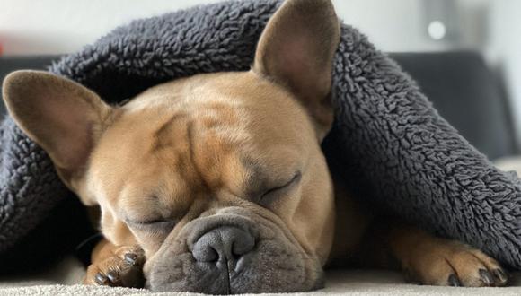 El que un perro se sacuda o tenga espasmos mientras duerme es algo normal. (Foto: Mylene2401 / Pixabay)