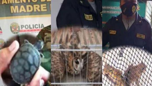 Los animales estaban en pésimas condiciones de salud e iban a ser vendidos en el mercado ilegal por un valor de 500 soles (Foto: PNP)