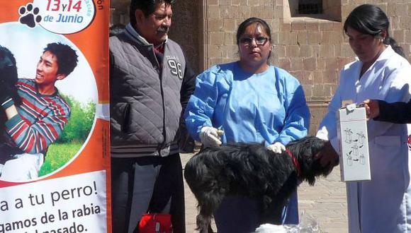 Puno: más de 220 mil perros serán vacunados contra la rabia
