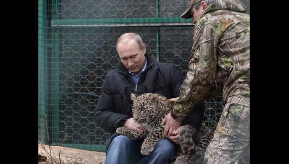 Putin calmó con la mirada a un leopardo que atacó a periodistas