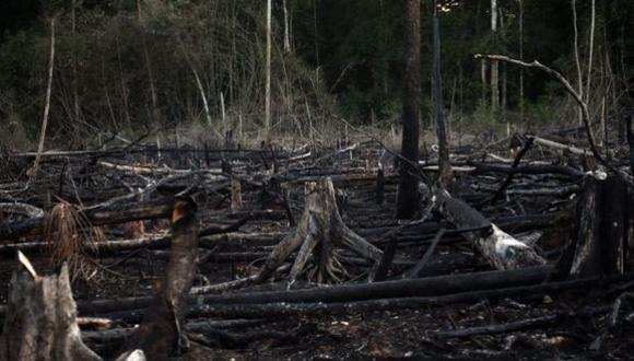 Loreto: condenan a prisión a directivos de empresa por tráfico de madera