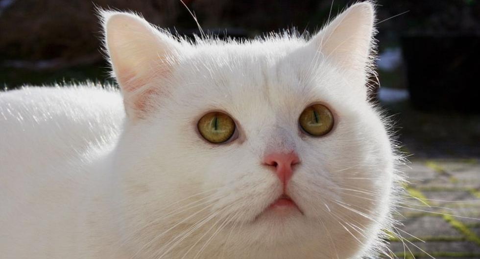 El clip de la reacción del gato ha dado la vuelta al mundo tras compartirse en YouTube. (Pixabay / cocozi)