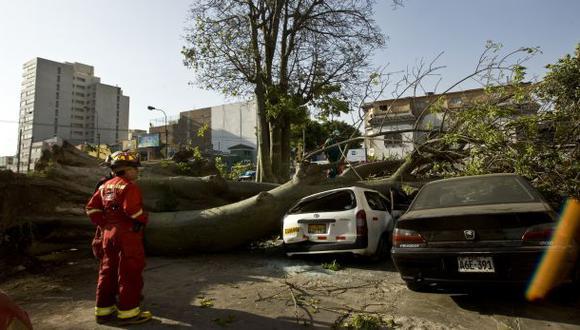 Caída de árboles: posibles causas y cuidados a tomar en cuenta