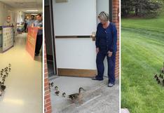 Conoce la tierna historia de una pata y sus crías que cruza por asilo de ancianos cada primavera