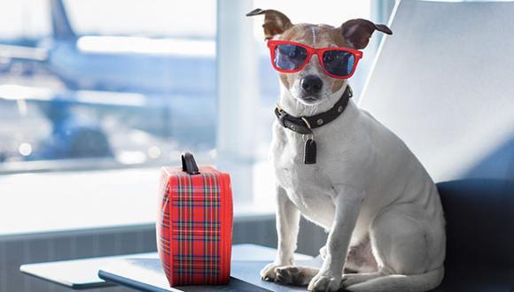 Si deseas incluir a tu mascota en tus próximos planes de viaje, lo más inteligente es planificar con tiempo de sobra. Foto: Flickr