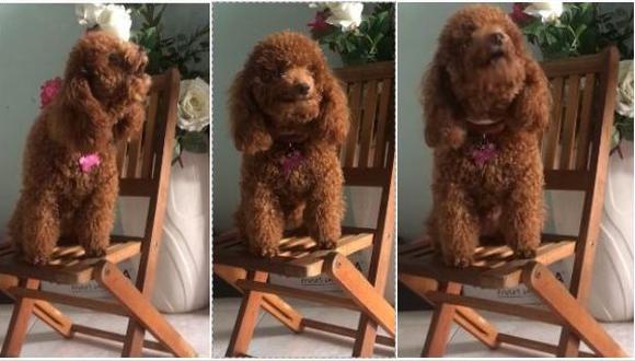 Como si se tratara de un artista en plena presentación, un cachorro se ha robado el show en YouTube al protagonizar unas imágenes en las que aparece cantando con la melodía de un piano. (Foto: captura de video)