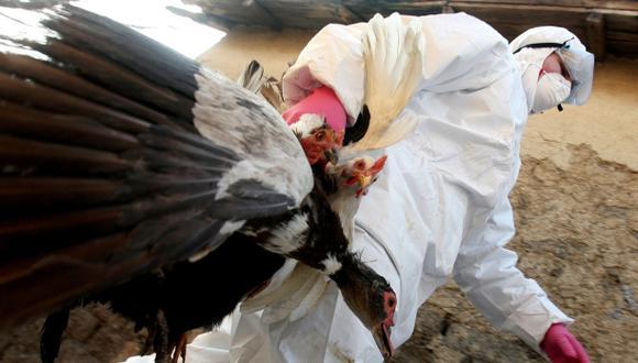 Una nueva cepa de gripe aviar causó una muerte en China