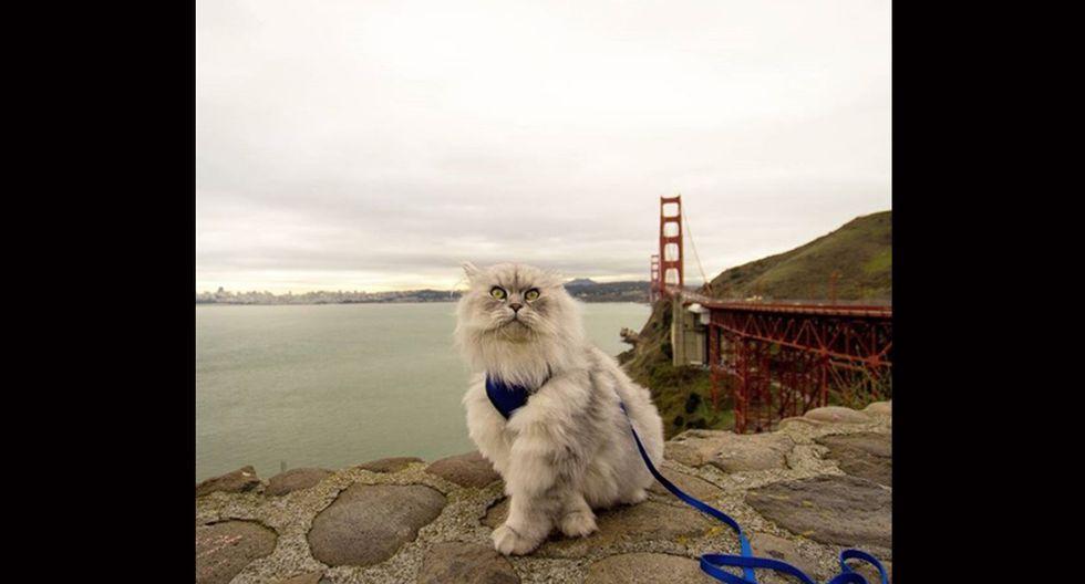 Gandalf. Es un bonito gato siberiano con un gran espíritu aventurero. Viaja mucho por Estados Unidos y lo que más le gusta son los grandes paisajes y la naturaleza. (Foto: Instagram/ @ganddygram)