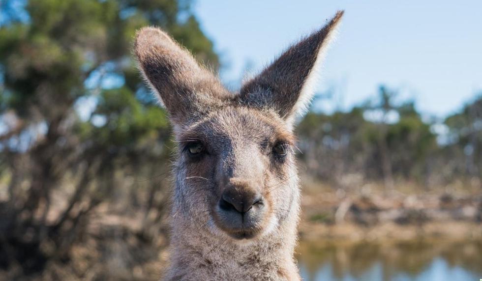 Foto 1 de 5: ¡Es imposible que te pierdas el video del canguro! Desliza para más imágenes. (Foto referencial: Pexels)