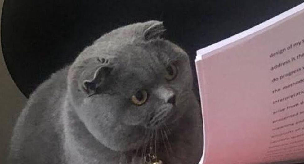 El meme del gato ha 'conquistado' a miles. (Captura)
