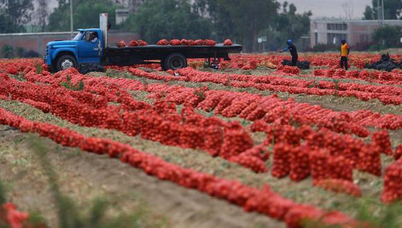 En el caso de las agroexportaciones por regiones, al mes de octubre estas crecieron en 19 de 24 departamentos. (Foto: Hugo Curotto / GEC)