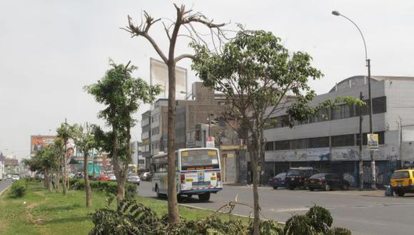 La Victoria denunciará a empresa Punto Visual por podar árboles