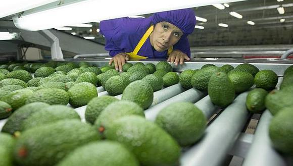 Perú es el segundo exportador mundial de palta. (Foto: GEC)