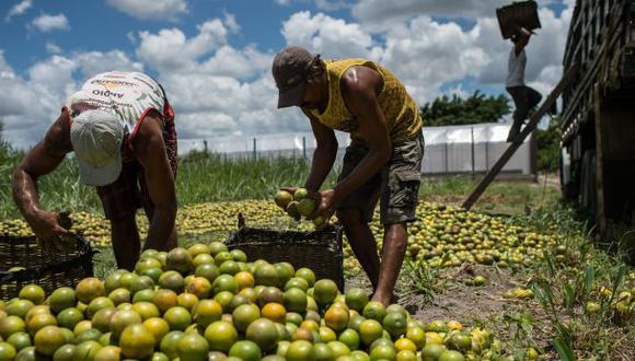ONU pide a países investigar más la contaminación de alimentos