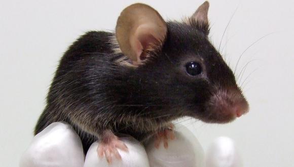 Nueva técnica de edición genética corrige ceguera en ratones