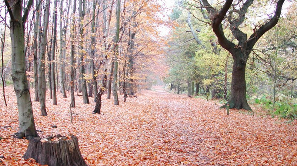 Son reales: Conoce estos mágicos bosques de Europa - 1