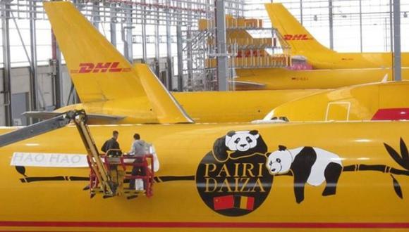 Transportan a pandas gigantes desde China a Bélgica en avión