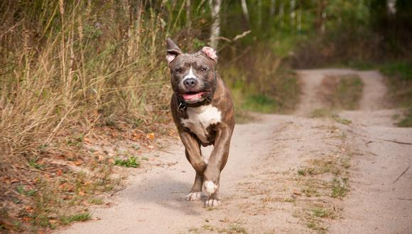 La divertida reacción de un perro al perderse de su dueño causa ternura en la red. (Foto: Pixabay / referencial)