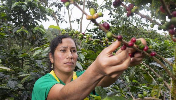Productora de café de la Cooperativa Aprocassi de Cajamarca. La región participa en Taza de Excelencia con el 41% de los mejores productores del país (Foto referencial: Aprocassi)