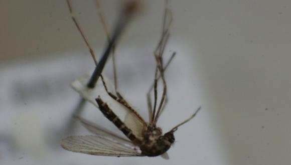 Tumbes: pacientes con chikungunya están bajo vigilancia médica