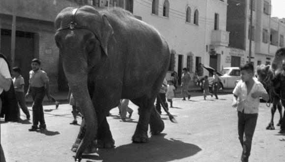 El lente del fotógrafo Ricardo Navarro de El Comercio captó el avance del inmenso paquidermo por las calles de nuestra capital. (Foto: GEC Archivo Histórico)