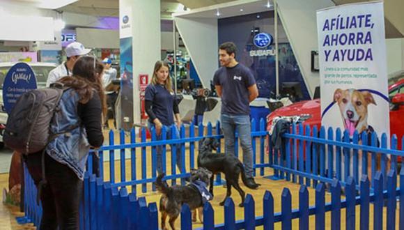 Durante el evento, WUF aprovechó para compartir información sobre su nuevo producto Club WUF, una 'app' que permite obtener descuentos mientras ayudas a perros sin hogar.