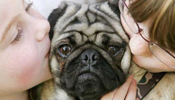 Perros perciben el lenguaje de forma similar a los humanos