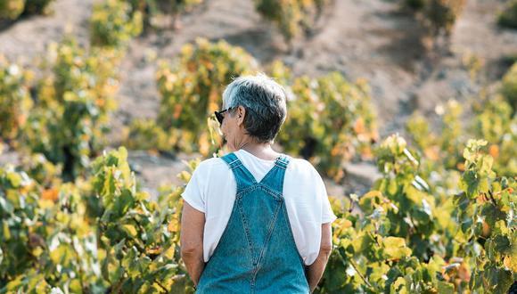 Nati Gordillo se enamoró de las uvas cuando ella y su familia compraron un terreno en Azpitia, con el objetivo de construir una casa de campo. En 2002 empezaron a sembrar uva quebranta. Veinte años más tarde, su pisco se vende en el mundo entero.