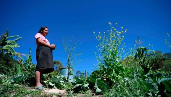 La producción agrícola ha decrecido en Centroamérica, lo cual genera problemas económicos y de empleo.(Foto: Getty Images vía BBc Mundo)