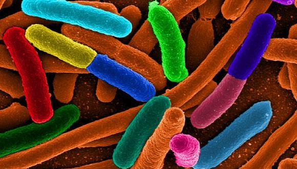 Esta bacteria fue salvada por proteína sintética