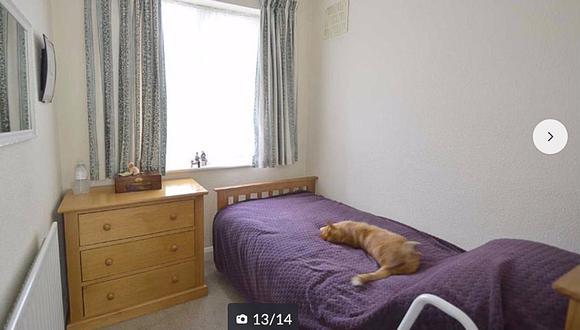 La sorpresa de un hombre al encontrar a su gato en las fotos de una casa a la venta. (Foto: @generoom / Twitter)