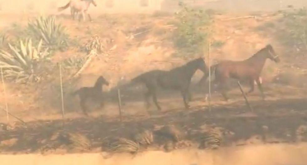 Se hizo viral en Facebook el momento en que un caballo decide regresar a un área incendiada para poner a salvo a sus crías que habían quedado rezagadas. (Foto: Captura)
