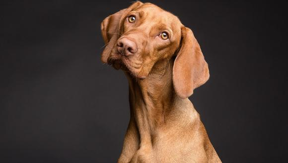 perros: por qué fueron domesticados por los humanos