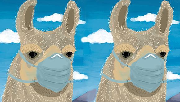Los anticuerpos de llama pueden ser la base para el desarrollo de herramientas terapéuticas útiles contra el coronavirus. (Ilustración: Giovanni Tazza)