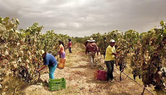 Ádex: Minsa genera sobrecosto a las empresas agrícolas