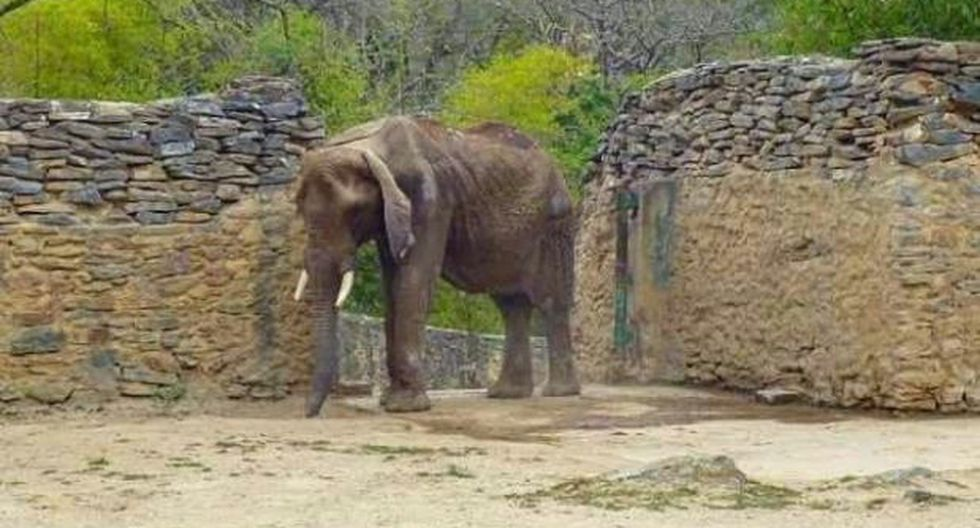 Venezuela: Zoológico no acepta ayuda para elefanta desnutrida