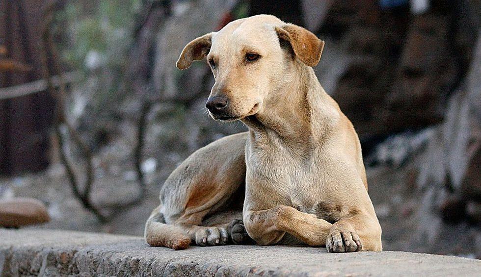 Los perros y motorizados protagonizan desde siempre un peculiar 'ritual'. (Foto: Pixabay)