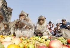 Cómo es la ciudad tailandesa donde los monos atraen a miles de turistas   FOTOS