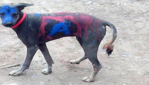 Cuerpo de perro peruano fue pintado con propaganda política