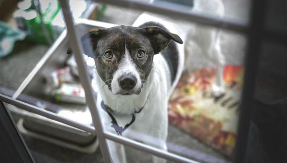 La historia de una perrita que va a restaurante para recibir comida fue publicada en redes sociales y se volvió viral casi de inmediato. (Foto: Referencial/Pixabay)