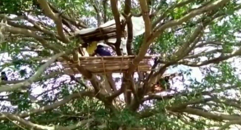 Pobladores de la india cumplen cuarentena en árboles. (Foto: Captura)