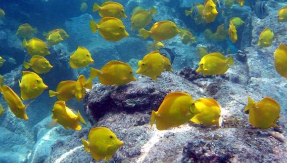 Los peces tienen mejor memoria de lo que se pensaba