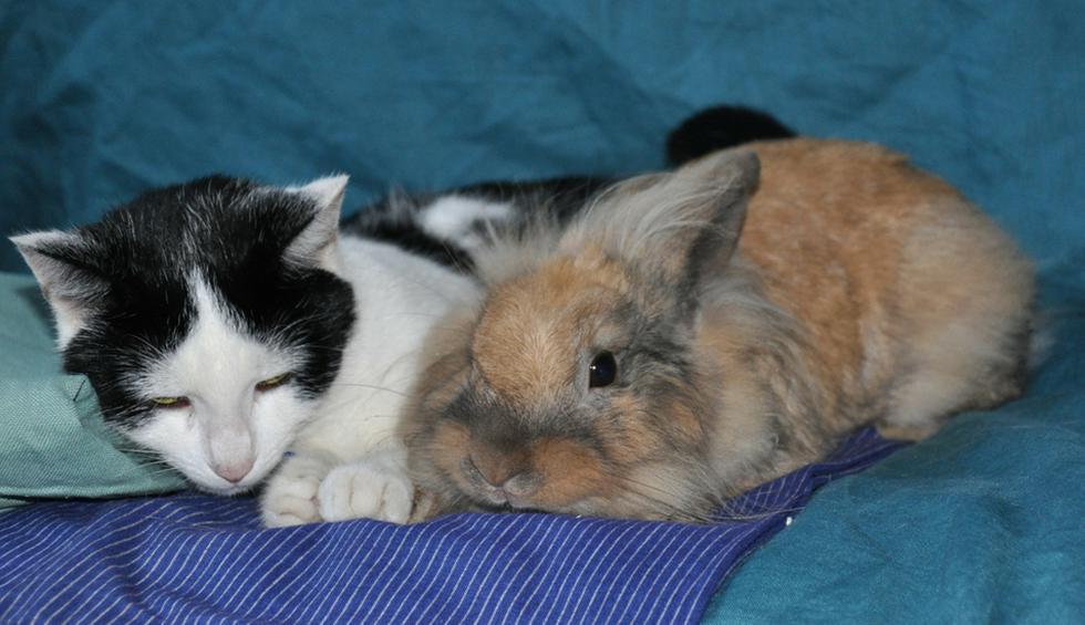 """Conejo hizo hasta lo imposible para liberar a su amiga gata de su """"prisión"""". (Crédito: Pixabay/Jessica Rodríguez Fatigatti en YouTube)"""
