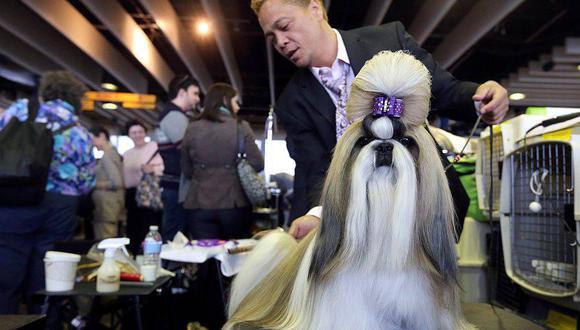 Inscripción de un perro a concursos caninos cuesta desde S/.160