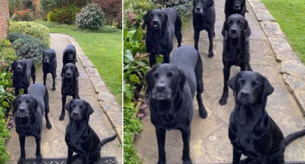 Los perros sorprendieron a todos con su educación. (YouTube: ViralHog)