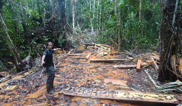 Las rondas de las comunidades han identificado zonas deforestadas y hecho el registro para denunciar ante la Fiscalía. Foto: Rondas indígenas del Bajo Huallaga.